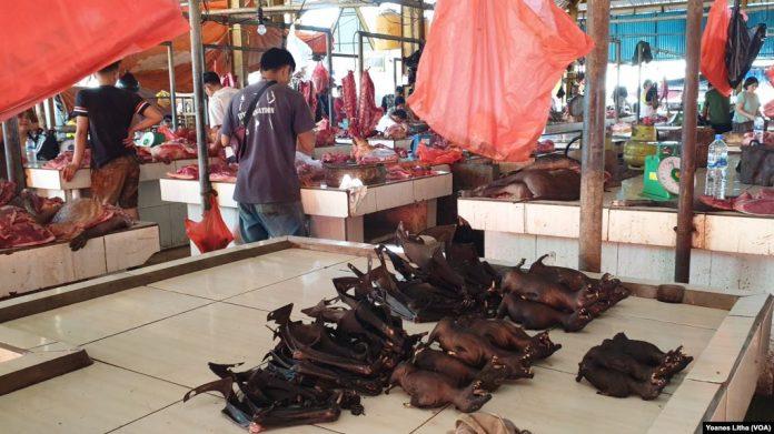 Corona Masih Merebak, Pasar Ekstrim Tomohon Yang Menjajakan Daging Kelelawar , Ular dan Tikus Masih Beraktifitas